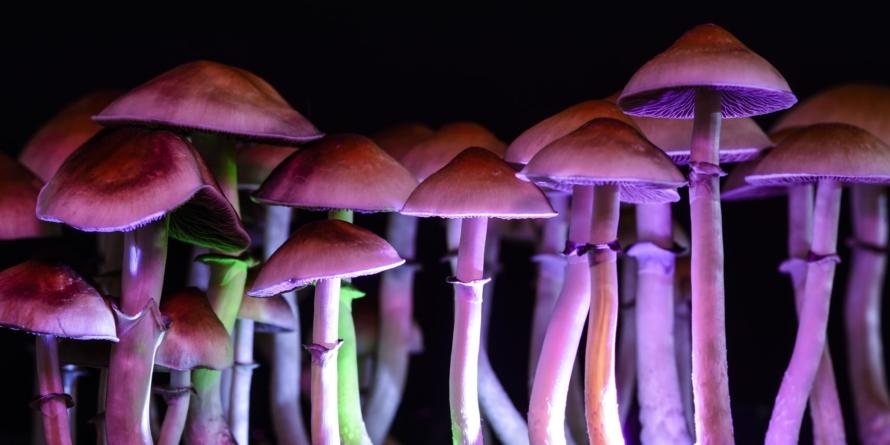 La psilocibina | Ingrediente clave de hongos alucinógenos para tratar la depresión
