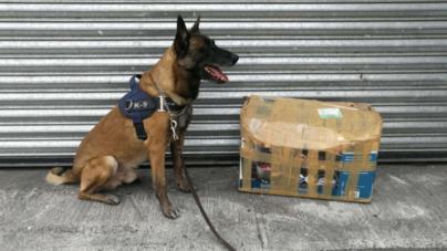 Binomio canino descubre droga en empresa de Culiacán