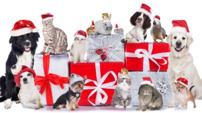 Las mascotas no son un objeto | Regalar animales en navidad; una práctica inconsciente