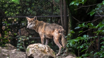 ¿Biodiversidad austera? | Zoológicos absorben responsabilidades de Semarnat