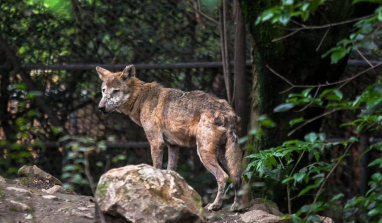 ¿Biodiversidad austera?   Zoológicos absorben responsabilidades de Semarnat