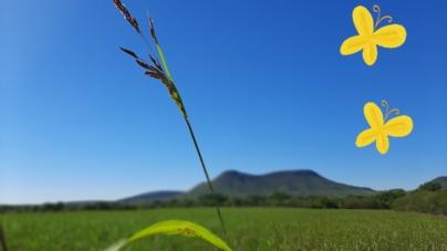 Zona chilanga | Comienzo in