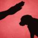 Letra muerta | Maltrato animal, el delito que nadie investiga en Sinaloa