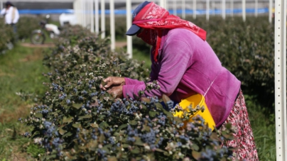 Sinaloa registra 11 mil 585 nuevos empleos ante el IMSS al mes de Enero