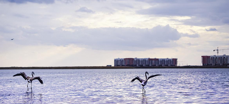 Por primera vez en muchos años, los flamencos acudieron al lago Maly Taldykol, en Nursultán, la capital de Kazajistán. FOTO: ONU/Kulpash Konyrova.